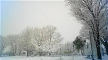 ☆うるう年の積雪☆
