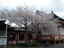 桜開花&誕生日♪