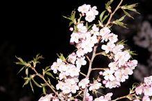 春見つけた(^^)
