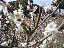 3月も終わり、春目前