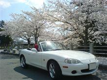 桜満開!おいでませ山口へ。