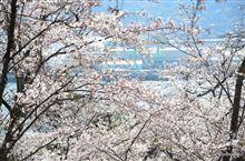 速報桜ドライブ 広島安芸津正福寺山公園