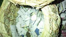 びびった! インコのぴーきち、卵を産んだ日