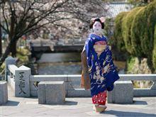 京都の桜は満開のところも