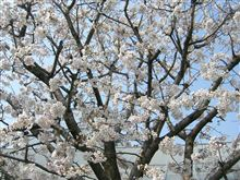 The best day for HANAMI.