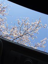 桜がうれしいもう一つの理由