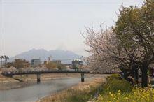 春と言えば桜☆桜と言えば花見でしょ♪