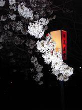 The night SAKURA