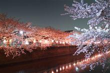 初の夜桜撮影