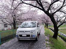 桜も散り始めたわ
