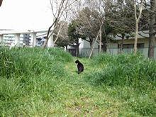 公園のネコ(*´∀`*)
