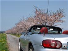 桜も終わりかな