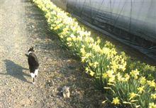 水仙が咲いた~。。。♪