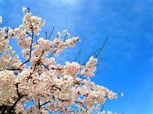 出張で京都に行ったついでにBianchi Frettaで琵琶湖一周に挑戦