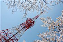 桜で、おなかがいっぱい?