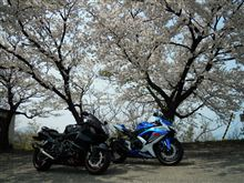 桜をみよう!