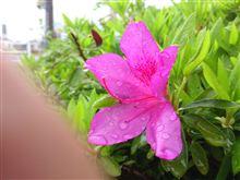 濡れた花弁に指が入ってる画像
