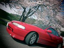 桜を探しに。