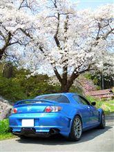 やっと阿武隈の桜を観られました(上)