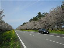 GWプチ旅行 in 秋田(後半)