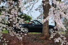 青い森、最後の桜