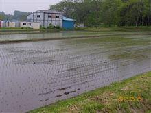 土曜日田植えの予定が急遽、今日に