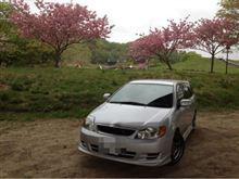 桜とフィールダー