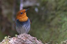 撮影機材の話 vol.2【野鳥撮影】