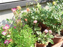 相棒に最も近い植物確定。