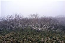 世にも奇妙な樹....そうでもないか (^_^;)
