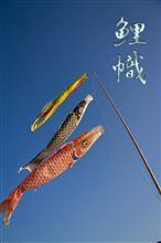 鯉のぼり^^