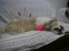 洗犬20120615