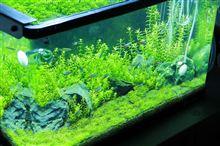 60cm水槽 水槽の経時変化 2012年6月第3週