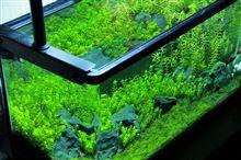 60cm水槽 水槽の経時変化 2012年6月第4週