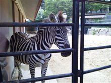 福岡市動植物園に行きました。