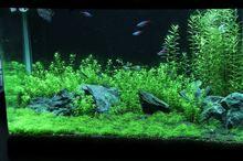 60cm水槽 水槽の経時変化 2012年6月第5週