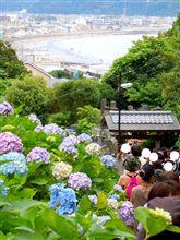 紫陽花日和-鎌倉にて