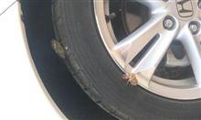 タイヤに珍しいことがおきました。