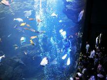 京都水族館に来てます。