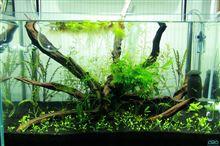 60cm水槽 水槽の経時変化 2012年8月第3週