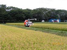 米刈りしました