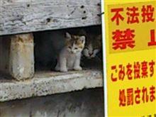ネコの親子に癒されました(^^)