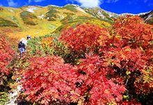 【いきいき富山】 雲上の秋、鮮やか 立山・室堂