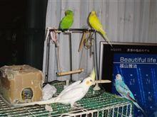 業務連絡:野鳥の会会員様