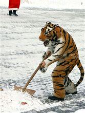 突然の積雪にお困りになった皆様、これ如何でしょう?…