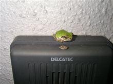 カエル君・・まだ冬眠しないの?