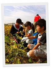 10月14日  枝豆収穫♪