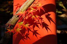 今日(京)の紅葉