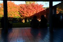 紅葉~光と影~