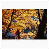 秋を求めて2012 後篇